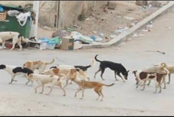 ههيا| شكوى من انتشار الكلاب الضالة بحي السراحنة