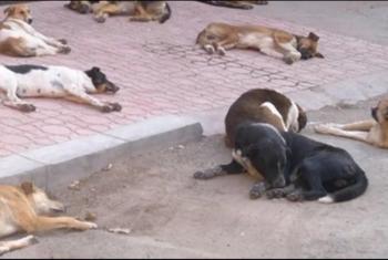 انتشار الكلاب الضالة يثير ذعر أهالى قرية طوخ القراموص بأبوكبير