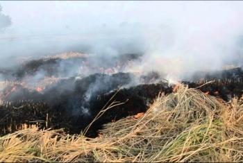 أهالي مدينة أبوحماد يشتكون من حرق قش الأرز