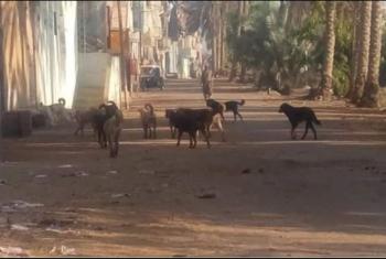 قرية بأبوكبير تستغيث من انتشار الكلاب الضالة: