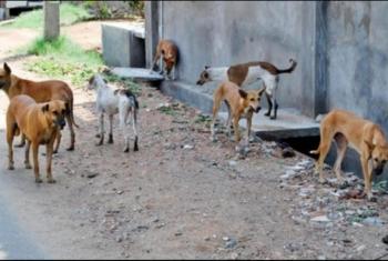 انتشار الكلاب في قرى أبوكبير تهدد الأطفال بكارثة