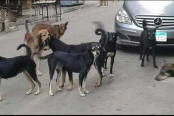 أزمة بسبب انتشار الكلاب والقمامة في شوارع قرية الطويلة بفاقوس