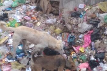 تلال القمامة تزاحم شوارع قرية