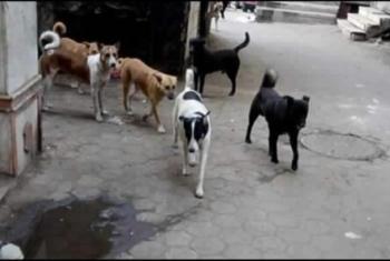بالأسماء.. الكلاب الضالة تعقر 5 أطفال بـ