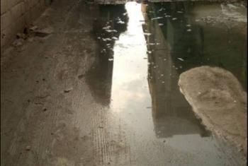 ديرب نجم| إهمال المسئولين يتسبب في غرق شوارع