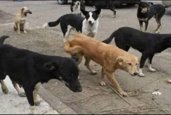 انتشار الكلاب الضالة يثير ذعر أهالي قرية تل القاضي بديرب نجم