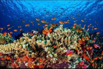 بسبب التغير المناخي.. علماء يتوقعون تحلل الشعاب المرجانية قبل نهاية القرن