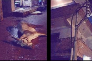 نجاة طفل من الموت بعد صعق كهربائي لحمار في مشتوق السوق