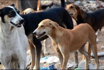 شكوى من انتشار الكلاب الضالة وسط شوارع