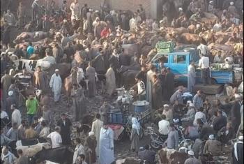 شكوى من إقامة سوق المواشي بقرية العصلوجي في الزقازيق