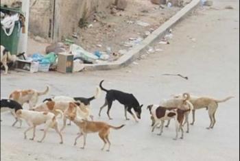حي السراحنة بههيا يشكو من انتشار الكلاب الضالة