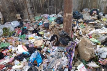 الزقازيق.. سكان شارع شعراوي يشتكون من تراكم القمامة