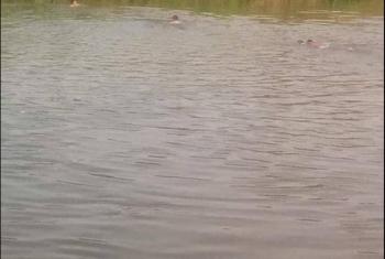 استمرار البحث لليوم الثاني عن شاب غرق في ترعة بههيا