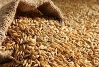غضب بين فلاحي منيا القمح لمنعهم من زراعة الأرز منذ 6 سنوات