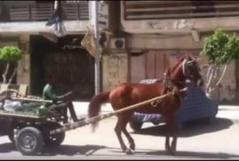 ديرب نجم.. ركلة حصان تنهي حياة طفلة