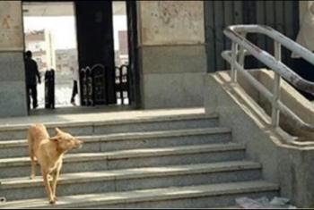 شكاوى من انتشار الكلاب بمحطة قطار أبوحماد