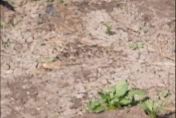 أهالي الشوافين بأولاد صقر يشكون عدم وصول مياه الري