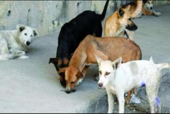 استغاثات من الكلاب الضالة بقرية في ههيا